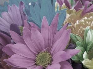 bright_flowersantiquey