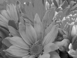 bright_flowersSat100minus